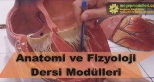 anatomi ve fizyoloji dersi megep modulleri