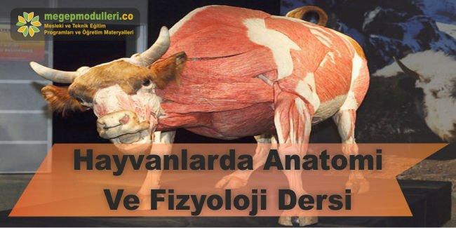 hayvanlarda anatomi ve fizyoloji dersi megep modulleri