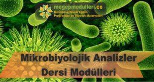mikrobiyolojik analizler dersi megep modulleri